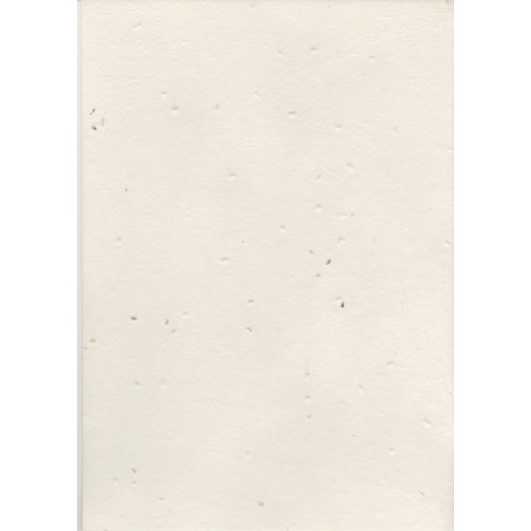 Seeded Vegie Paper A4 (Carrot) (Pack of 20 sheets)