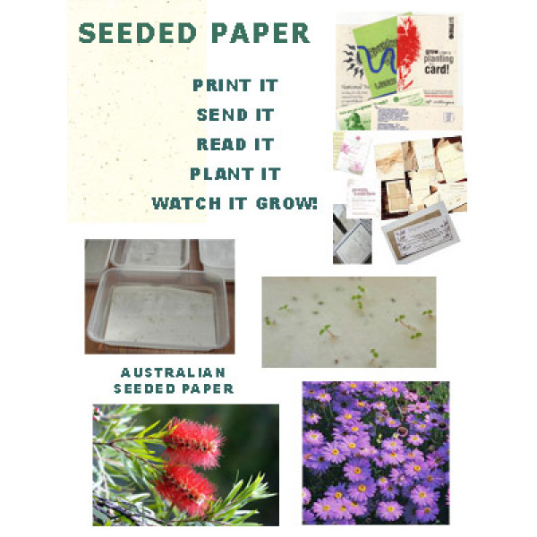Seeded Paper A4 (Swan River Daisies) (Pack of 20 sheets)  - with deckle edge